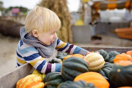Cute little boy choosing organic pumpkin on agricultural farm at autumn.Pumpkin is traditional vegetable used on American holidays - Halloween and Thanksgiving Day. Фото со стока