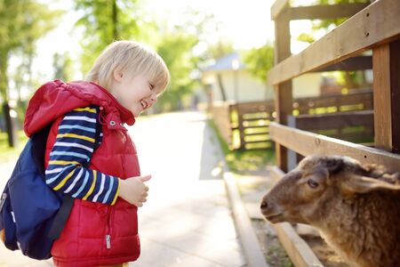 Little boy petting sheep. Child at indoor petting zoo. Kid having fun in farm with animals. Children and animals. Fun for kids on school holidays. Banco de Imagens