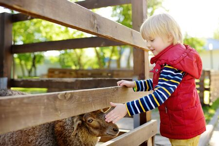 Little boy petting sheep. Child in petting zoo. Kid having fun in farm with animals. Children and animals. Fun for kids on school holidays.