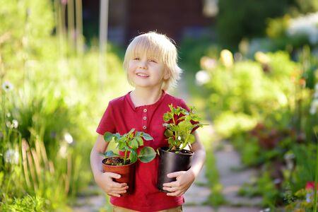 Kleiner Junge, der am sonnigen Sommertag Sämling in Plastiktöpfen auf dem heimischen Garten hält. Mama kleiner Helfer.