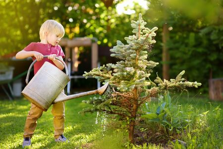 Cute little boy watering blue spruce in the garden at summer sunny day. Mommy little helper Stock Photo