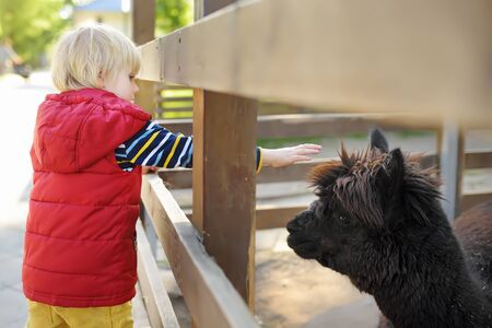 Little boy petting lama. Child in petting zoo. Kid having fun in farm with animals. Children and animals. Fun for kids on school holidays.