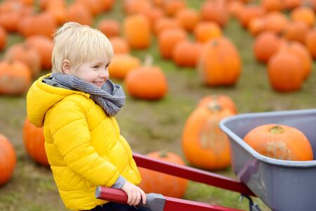 Little boy on a tour of a pumpkin farm at autumn. Child sitting on giant pumpkin. Pumpkin is traditional vegetable used on American holidays - Halloween and Thanksgiving Day. Stock Photo