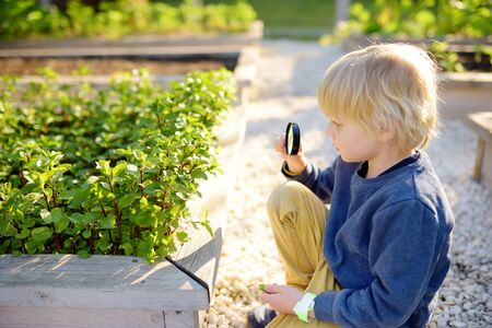 Little child exploring nature with magnifying glass in community kitchen garden . Close up. Little boy looking with magnifying glass on leafs of mint. Summer activity for inquisitive child 写真素材