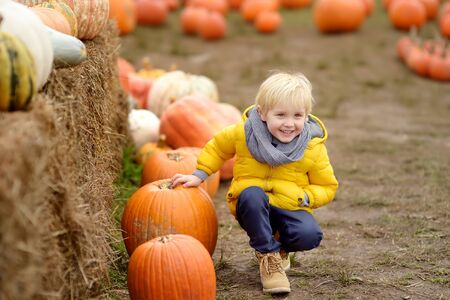 Little boy on a tour of a pumpkin farm at autumn. Child sitting near giant pumpkin. Pumpkin is traditional vegetable used on American holidays - Halloween and Thanksgiving Day.