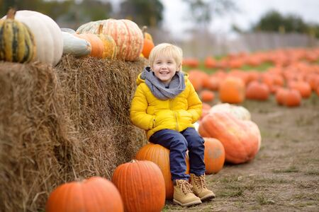 Little boy having fun on a tour of a pumpkin farm at autumn. Child sitting on giant pumpkin. Pumpkin is traditional vegetable used on American holidays - Halloween and Thanksgiving Day.