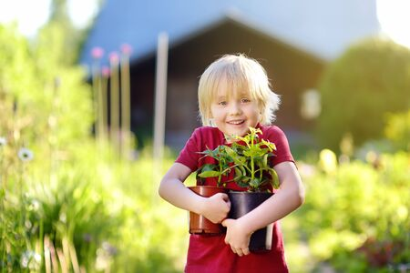 Little boy holding seedling in plastic pots on the domestic garden at summer sunny day. Mommy little helper.