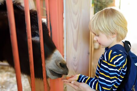 Little boy feeding donkey. Child in petting zoo. Kid having fun in farm with animals. Children and animals. Fun for kids on school holidays.