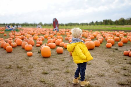 Little boy on a tour of a pumpkin farm at autumn. Child standing on large field with giant pumpkin. Traditional vegetable used on American holidays - Halloween and Thanksgiving Day. Stock Photo