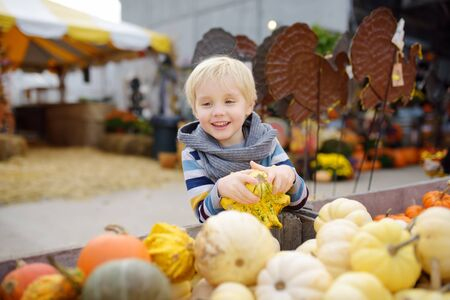 Cute little boy choosing organic pumpkin on agricultural farm at autumn. Pumpkin is traditional vegetable used on American holidays - Halloween and Thanksgiving Day. Stock Photo - 124979216