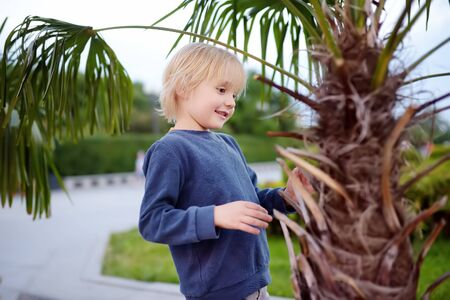 Little boy exploring palm tree. Child first time sees palm tree. Activity for inquisitive child. Travel and tourism.