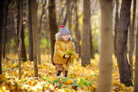Little boy during stroll in the forest at cold sunny autumn day. Active family time on nature. Hiking with little kids