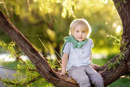 Little boy is sitting on a branch of big tree and is dreaming. Child's games. Active family time on nature. Hiking with little kids. Imagens