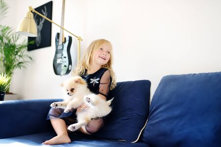 Little girl playing with 2-month old pomeranian spitz puppy. Cute fluffy small dog. Loving owner with his domestic pet.