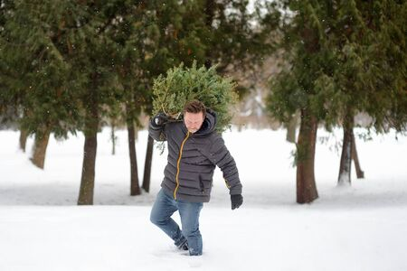 Handsome man bring a Christmas tree from winter forest overcoming snowdrifts and snowfall. Christmas holidays.