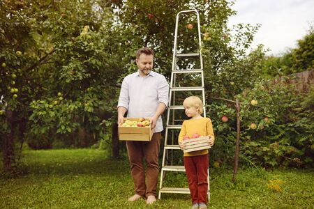 Little boy with his father picking apples in orchard. Child and dad holding wooden boxes with harvest. Harvesting in the domestic garden in autumn. Retro style.