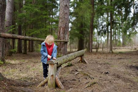 Little boy saws a branch with a small penknife on a large felled log while walking in the forest at spring. Outdoors activities for children.