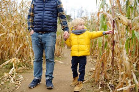 Family walking among the dried corn stalks in a corn maze. Little boy and his father having fun on pumpkin fair at autumn. Traditional american amusement on pumpkin fair.
