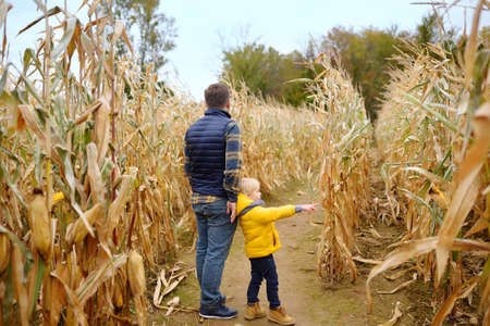 Back view of family walking among the dried corn stalks in a corn maze. Little boy and his father having fun on pumpkin fair at autumn. Traditional american amusement on pumpkin fair. Stock Photo