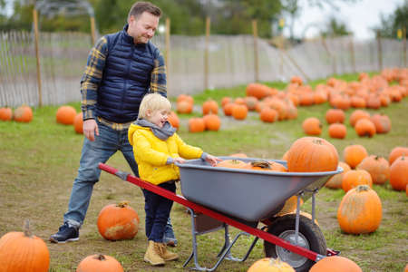 Little boy and his father on a pumpkin farm at autumn. Family with child hold a wheelbarrow with pumpkins. Pumpkin is traditional vegetable used during American holidays - Halloween and Thanksgiving Day.