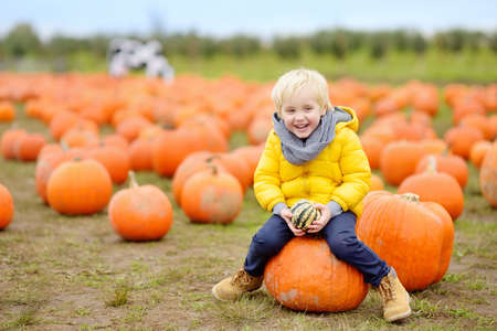 Little boy on a pumpkin farm at autumn. Preschooler child a sitting on huge pumpkin. Pumpkin is traditional vegetable used during American holidays - Halloween and Thanksgiving Day. Stock Photo