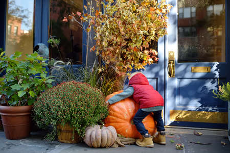 Little boy hugging giant pumpkin. Child having fun in sunny autumn day. Pumpkins, dried leafs and flowers traditional decoration for halloween on the street of New York. Banco de Imagens