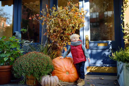 Little boy standing near giant pumpkin. Pumpkins, dried leafs and flowers traditional decoration for halloween on the street of New York.