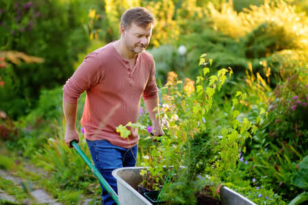 Handsome gardener man pushing wheelbarrow with plant seedlings in backyard. Spring season work in garden. Person are going to plant trees. Gardening, hobby.