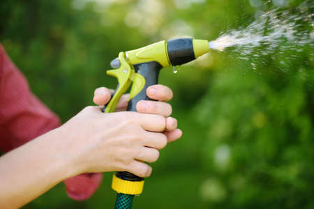 Woman gardener watering plants with hose with sprinkler in sunny backyard. Gardening. Seasonal work in the garden. Close-up picture of hands and spray bottle.