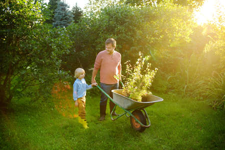 Gardener man and little child pushing wheelbarrow with plant seedlings in backyard. Spring season work in garden. Father and son are going to plant trees. Quality family leisure time, together hobby. 免版税图像
