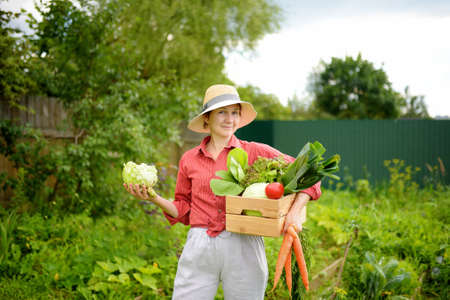 Woman farmer holding freshly picked organic vegetables. Healthy vegetarian food. Harvesting. Local business