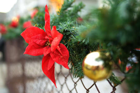 Close-up photo of Christmas and New Year decorations. Fence decorated with a garland of artificial fir branches with red flowers. Outdoors Xmas decorations 免版税图像