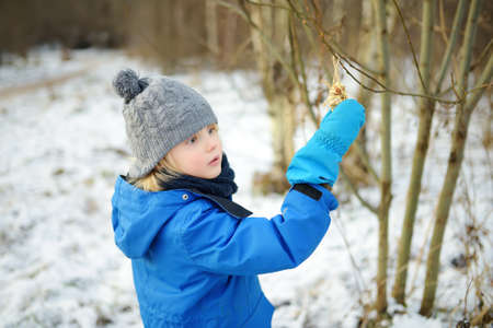 Preschooler child hangs homemade cookie made from seeds and cereals on a tree branch for the birds. Little boy takes care of wildlife during winter season. Kid exploring nature. Wintertime activity