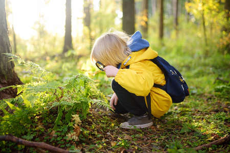 Preschooler boy is exploring nature with magnifying glass. Little child is looking on leaf of fern with magnifier. Summer vacation for inquisitive kids in forest. Hiking. Boy-scout Reklamní fotografie