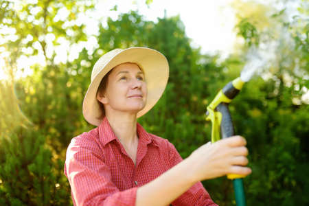 Mature woman gardener wearing straw hat watering plants with hose with sprinkler in sunny backyard. Gardening. Seasonal work in the garden. Close-up picture of hands and spray gun Stockfoto