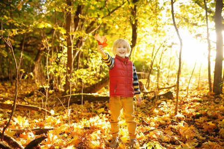 Little boy having fun during stroll in forest at sunny autumn day. Child playing with maple leaves. Hiking with little kids. Autumn outdoor activity for family with kids. Stockfoto