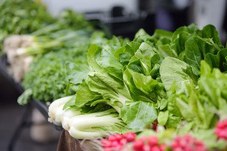 Fresh bio vegetables and herbs on street farmer market. Typical local agricultural fair of weekend. Sale of organic veggies - radishes, green onions, latuck, herbs. Standard-Bild