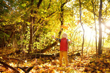Little boy having fun during stroll in the forest at sunny autumn day. Child playing maple leaves. Baby tossing the leaves up. Active family time on nature. Hiking with little kids. Leaves rustle. Standard-Bild
