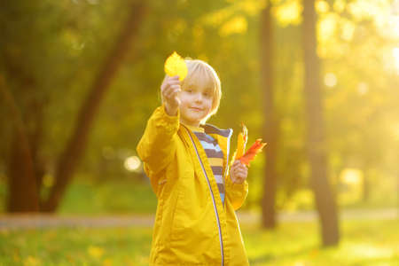 Little boy having fun during stroll in forest at sunny autumn day. Child playing with maple leaves. Hiking with little kids. Autumn outdoor activity for family with kids. Standard-Bild