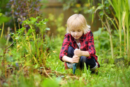 Little boy dig shoveling in backyard at summer sunny day. Mommy little helper in the garden. Gardening. Standard-Bild