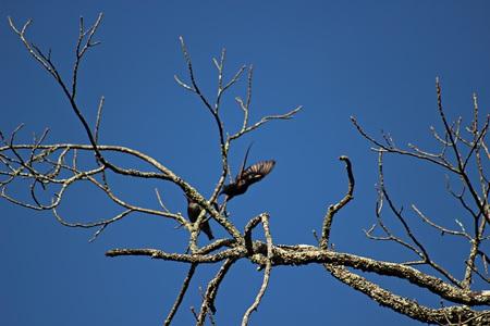 Birdie Stretch Banco de Imagens