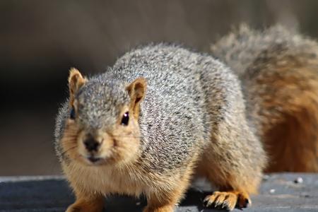 nutty: Squirrel