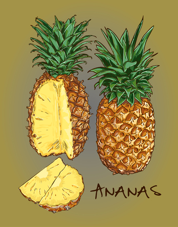 article icon: Vector Pineapple Illustration Set