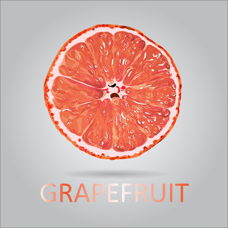 Vector Grapefruit Slice Illustration