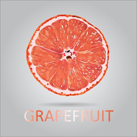 Vector grapefruit slice illustratie