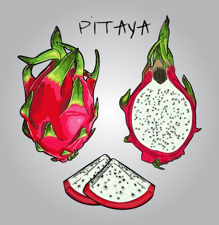 Vector Pink Dragon Fruit Illustration