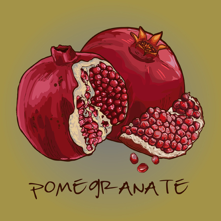 Vector Pomegranate Illustration Иллюстрация