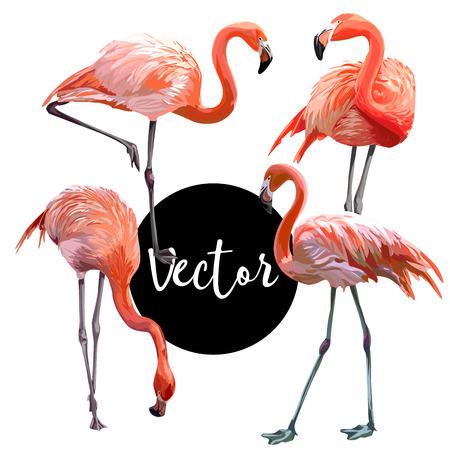 Vector Flamingo Illustration Set