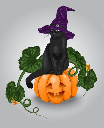 Vector Halloween Pumpkin With Black Cat Illustration