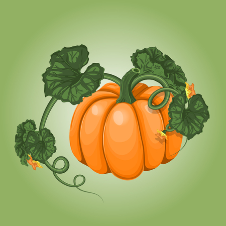 article icon: Vector Pumpkin Illustration